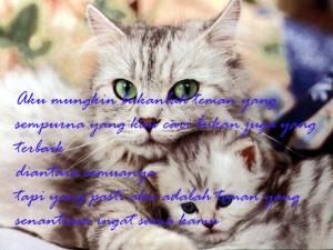 Gambar kucing kata kata cinta